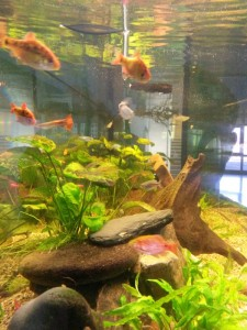 Aquarium_hp2
